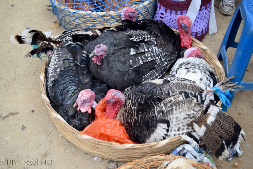 San Francisco El Alto Animal Market Turkeys