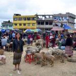 San Francisco El Alto Weekly Friday Animal Market
