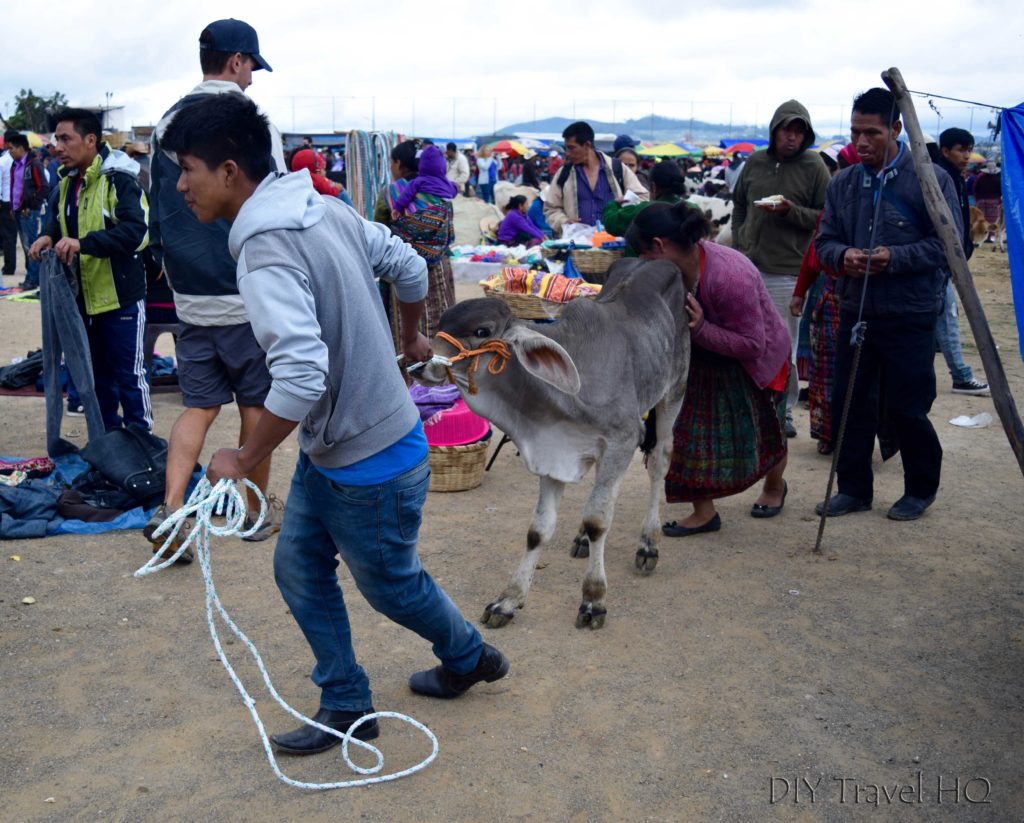 San Francisco El Alto Market Pushing Stubborn Cow