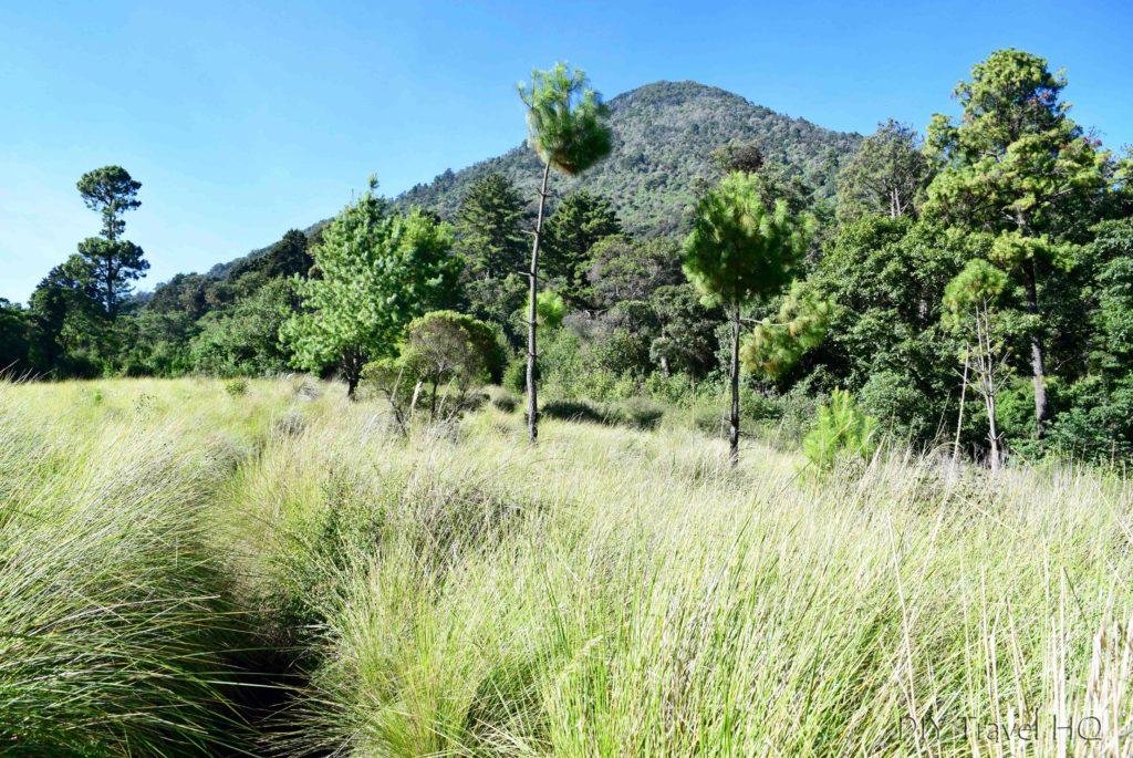 Volcan Santa Maria Grasslands