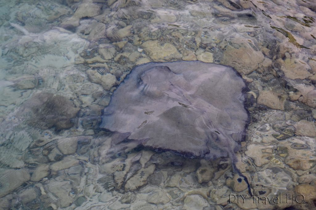 Stingray on Glovers Atoll Resort