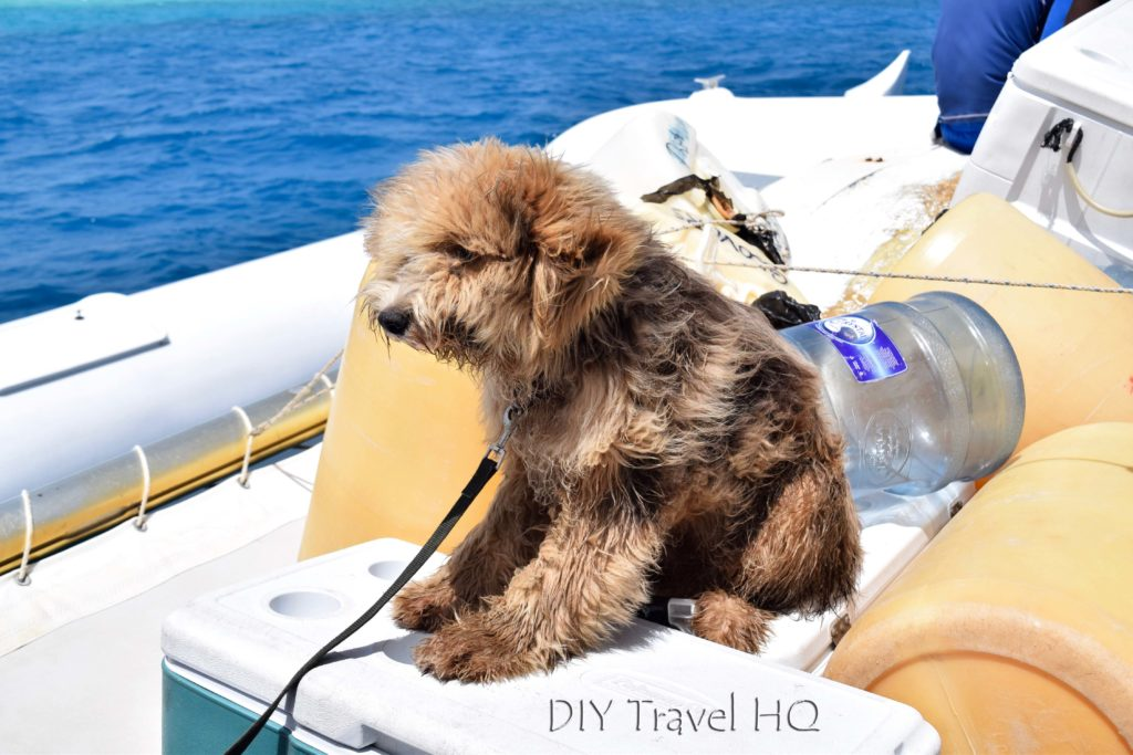Glovers Atoll Resort dog in boat