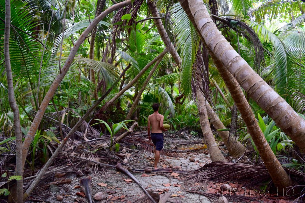 Searching for coconuts on Glovers Island