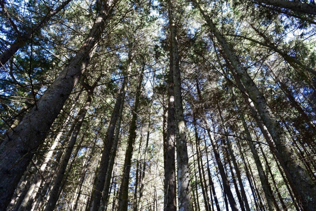 Hike to San Juan Atitan Pine Forest