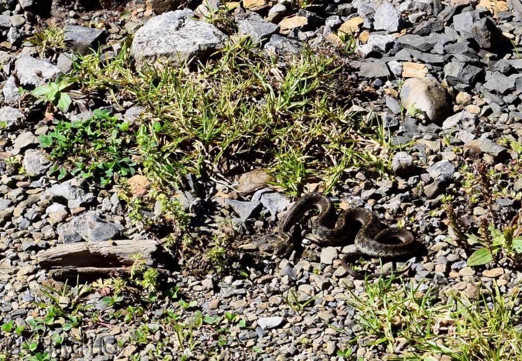 Hike to San Juan Atitan Snake on Trail