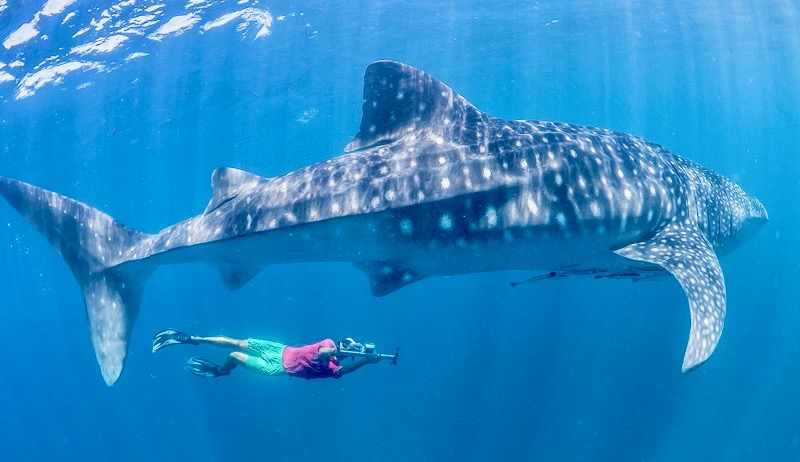 Budget Whale Shark Tours Isla Mujeres