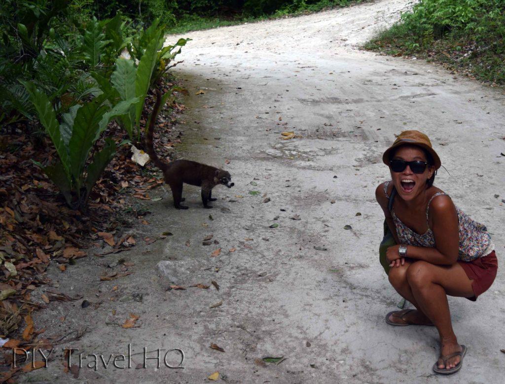 Tikal Coatis Sheena