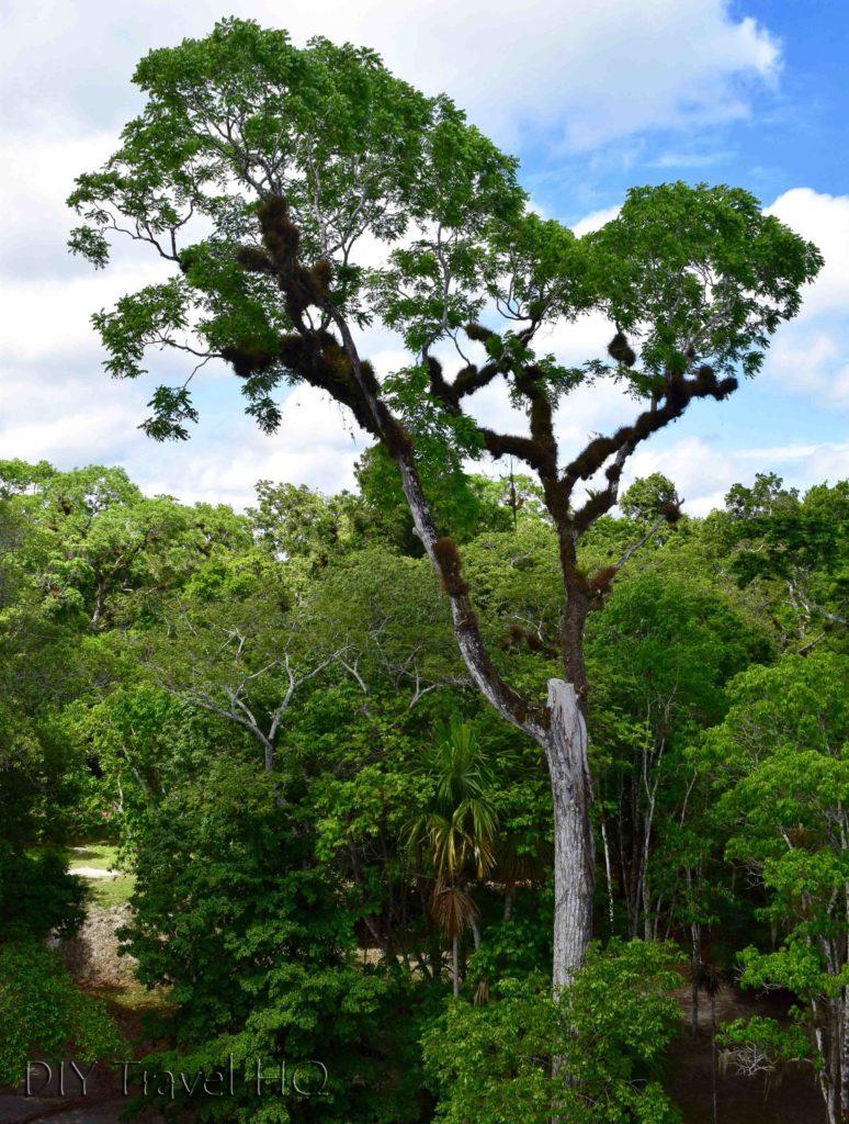 Tikal Nature Lost World Jungle View