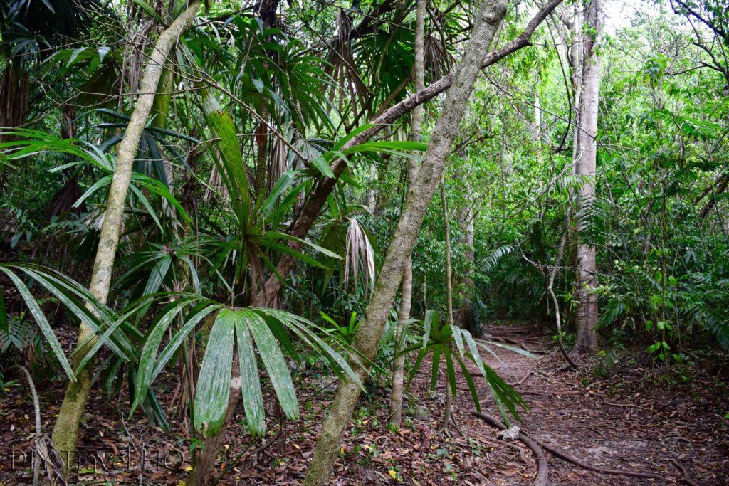 Tikal Trails Between Temples