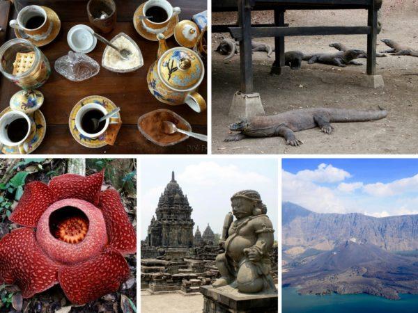Kopi Luwak, Komodo, Rafflesia, Prambanan, Rinjani