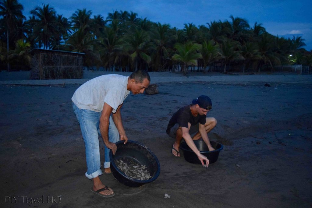 Releasing sea turtles in El Salvador