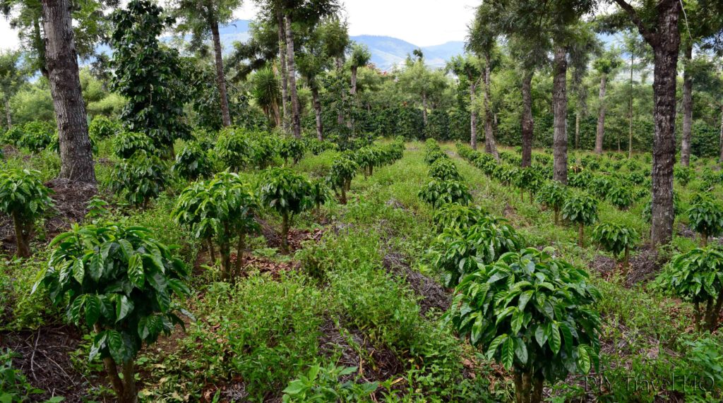 Coffee plots on DLG tour