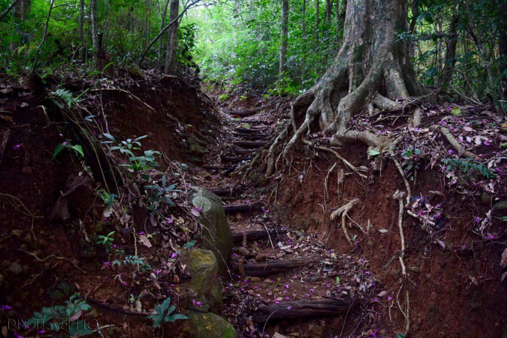 El Imposible National Park Cerro Leon Trail