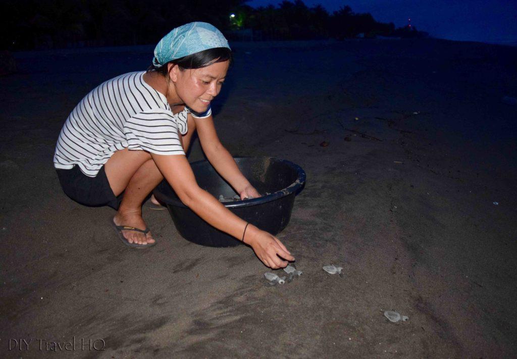 Setting turtles free on beach