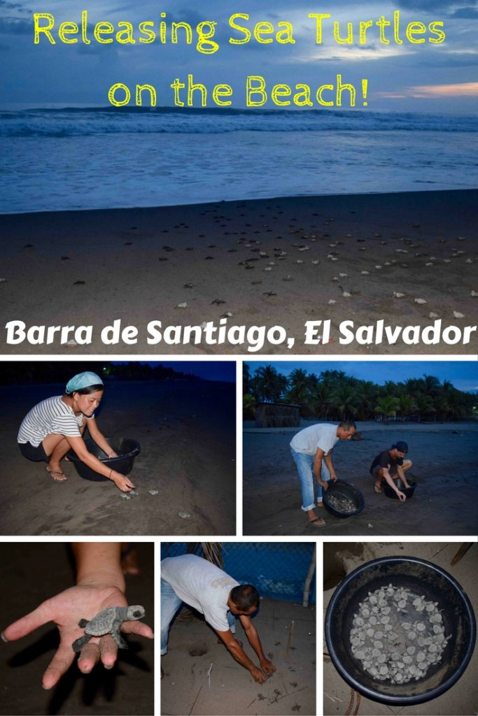 Releasing sea turtles is a top bucket list experience in Central America & you can do it at Barra de Santiago in El Salvador. Visit the turtle hatchery where baby sea turtles are dug up from the sand & released into the sea every evening. From transport via Sonsonate to accommodation at Capricho Beach House, find out everything you need to know & why you may want to do it elsewhere in Central America…