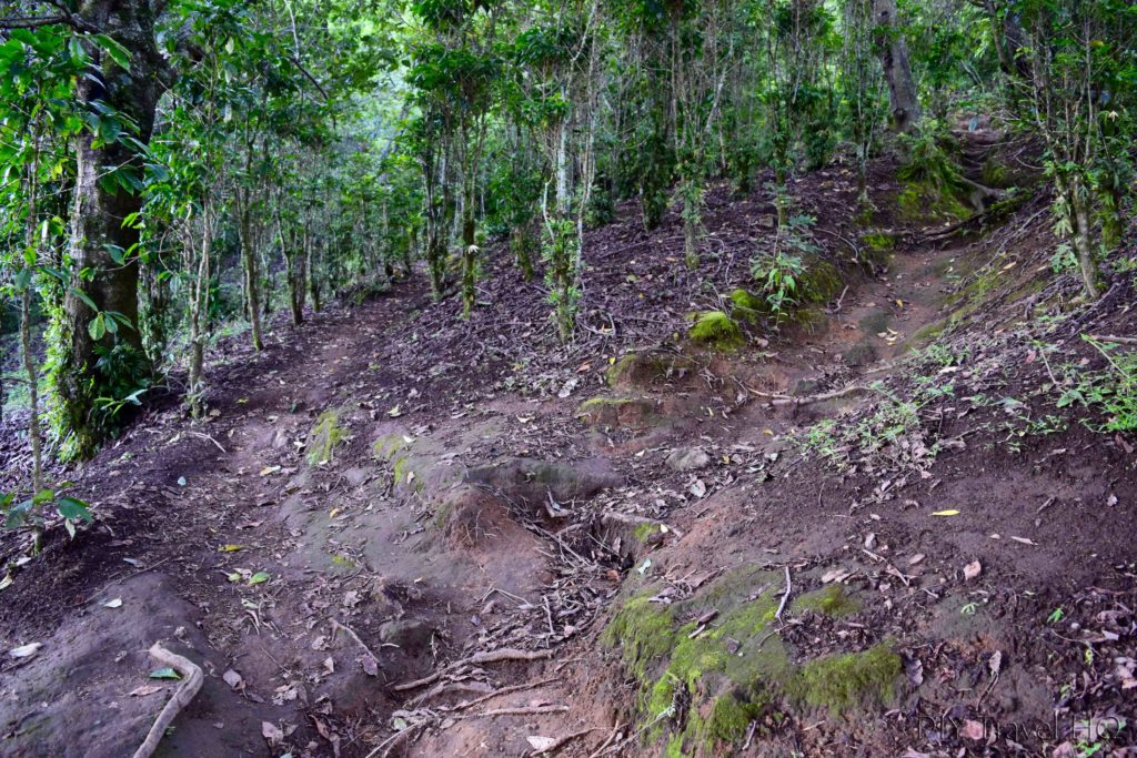 Volcan San Pedro Trail Splits & Then Merges