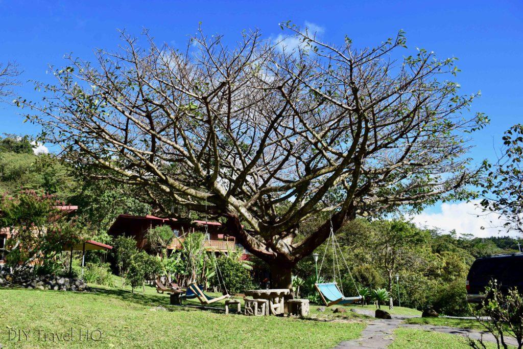 Hammock swing tree
