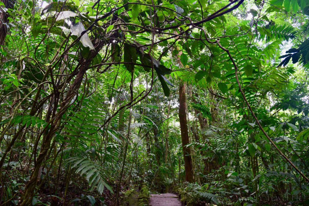 EcoTermales Rain Forest in La Fortuna