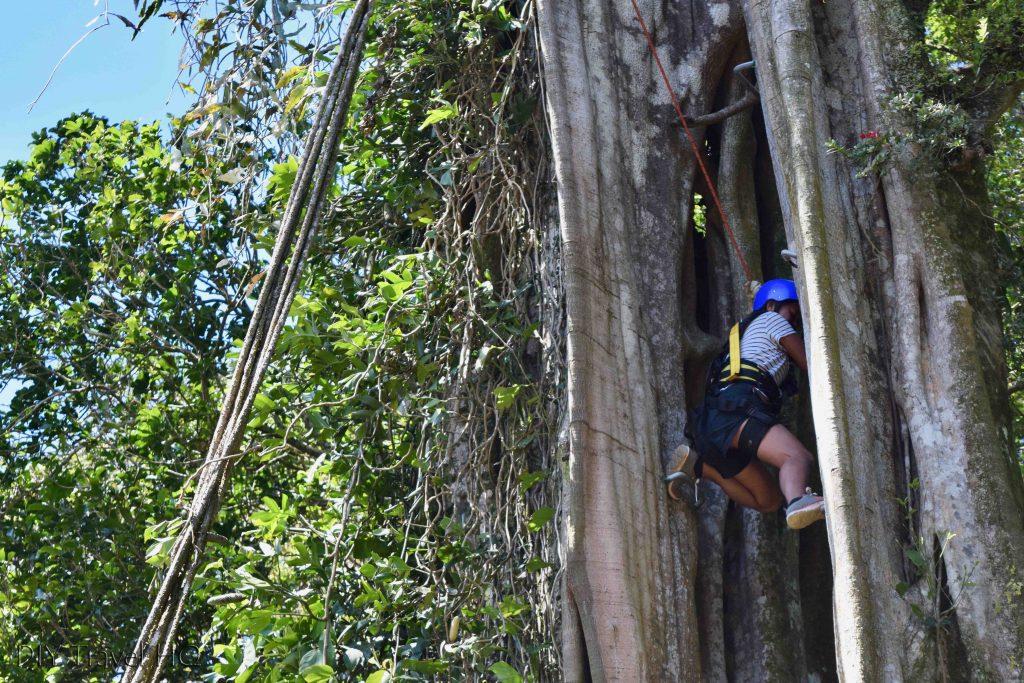 Tree climbing at Finca Modelo