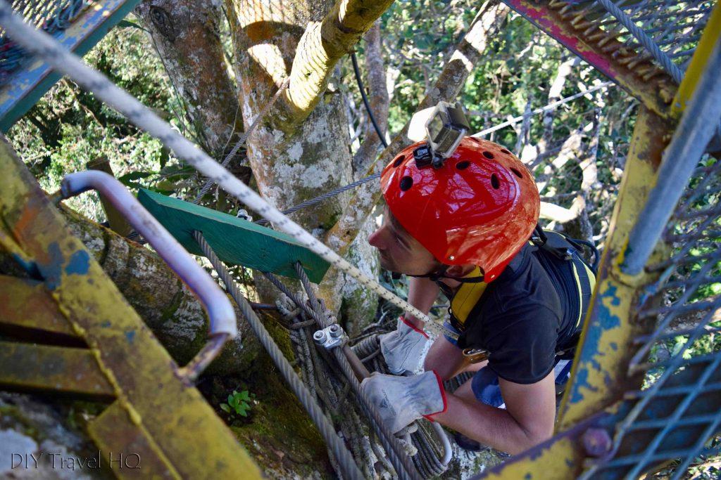 Tree climbing Finca Modelo