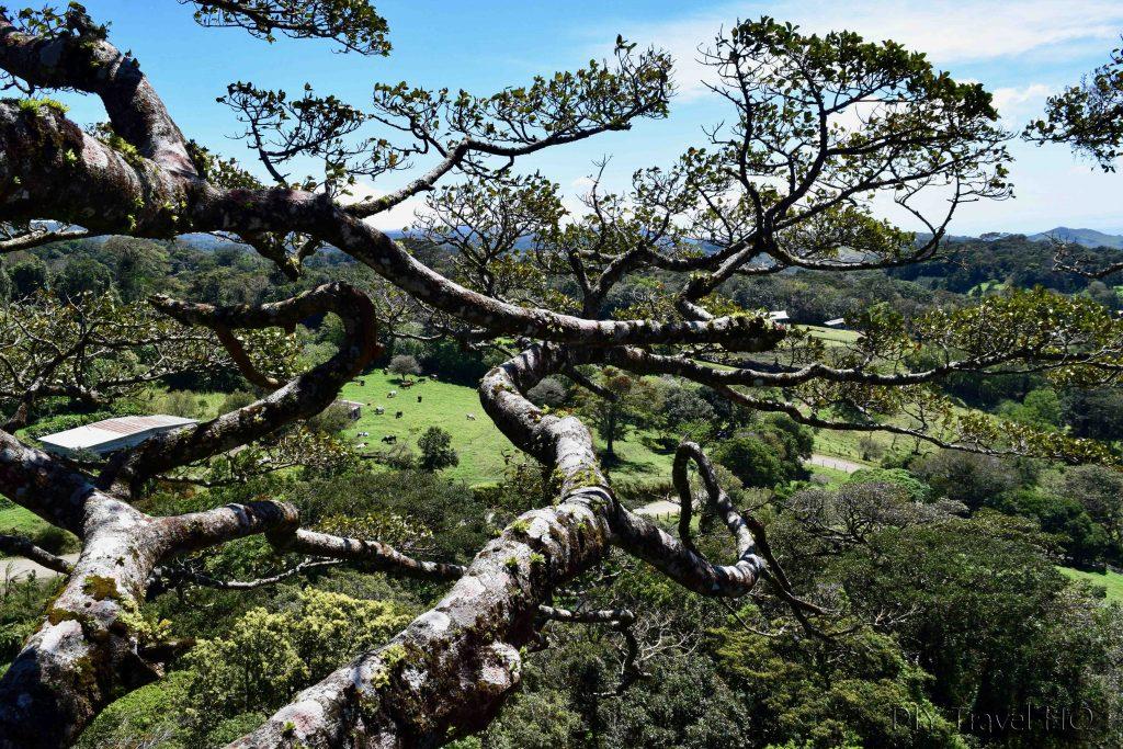 View of Monteverde