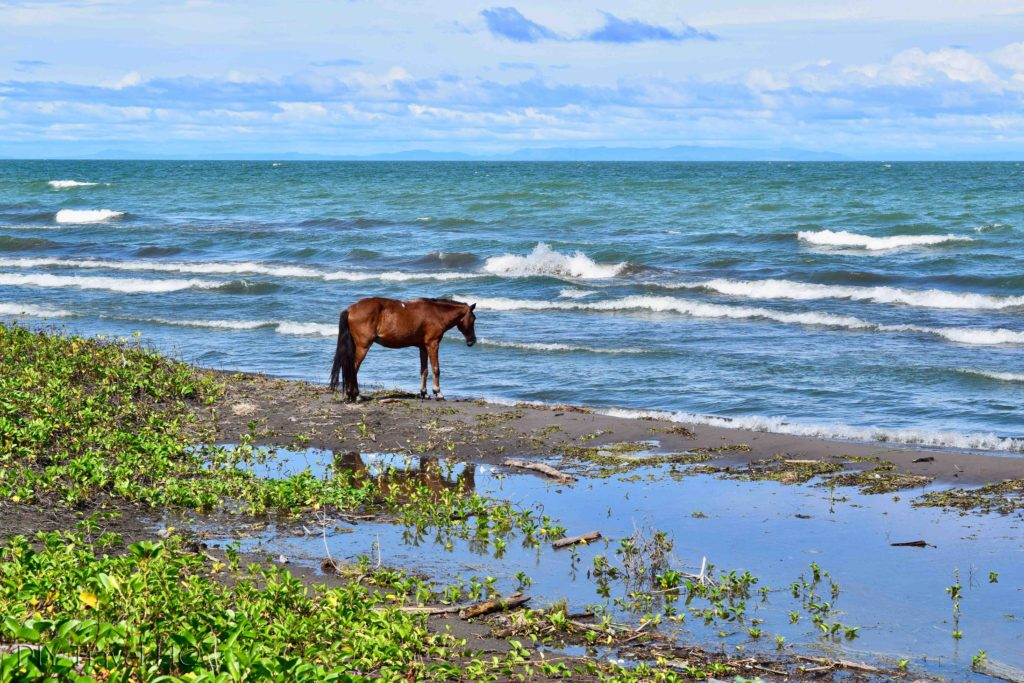 Horse on Santa Domingo beach