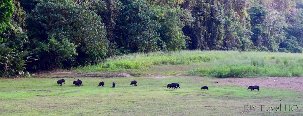 Corcovado National Park tours