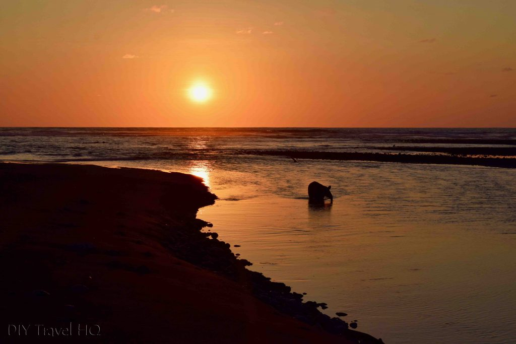Tapir sunset