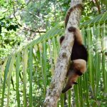 Corcovado National Park: 3 Day Hike with Surcos Tours