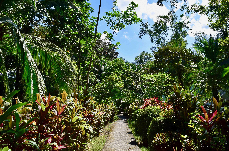 Картинки тропического сада