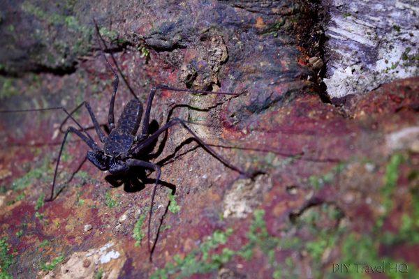 Spider Manuel's Tours