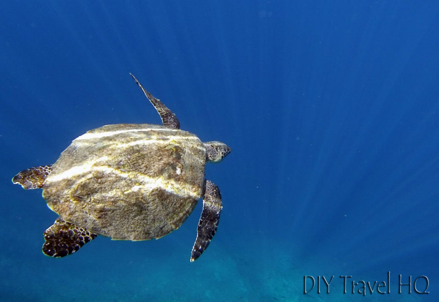 Turtle Coiba National Park