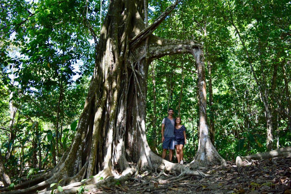 Corcovado Tree Frame