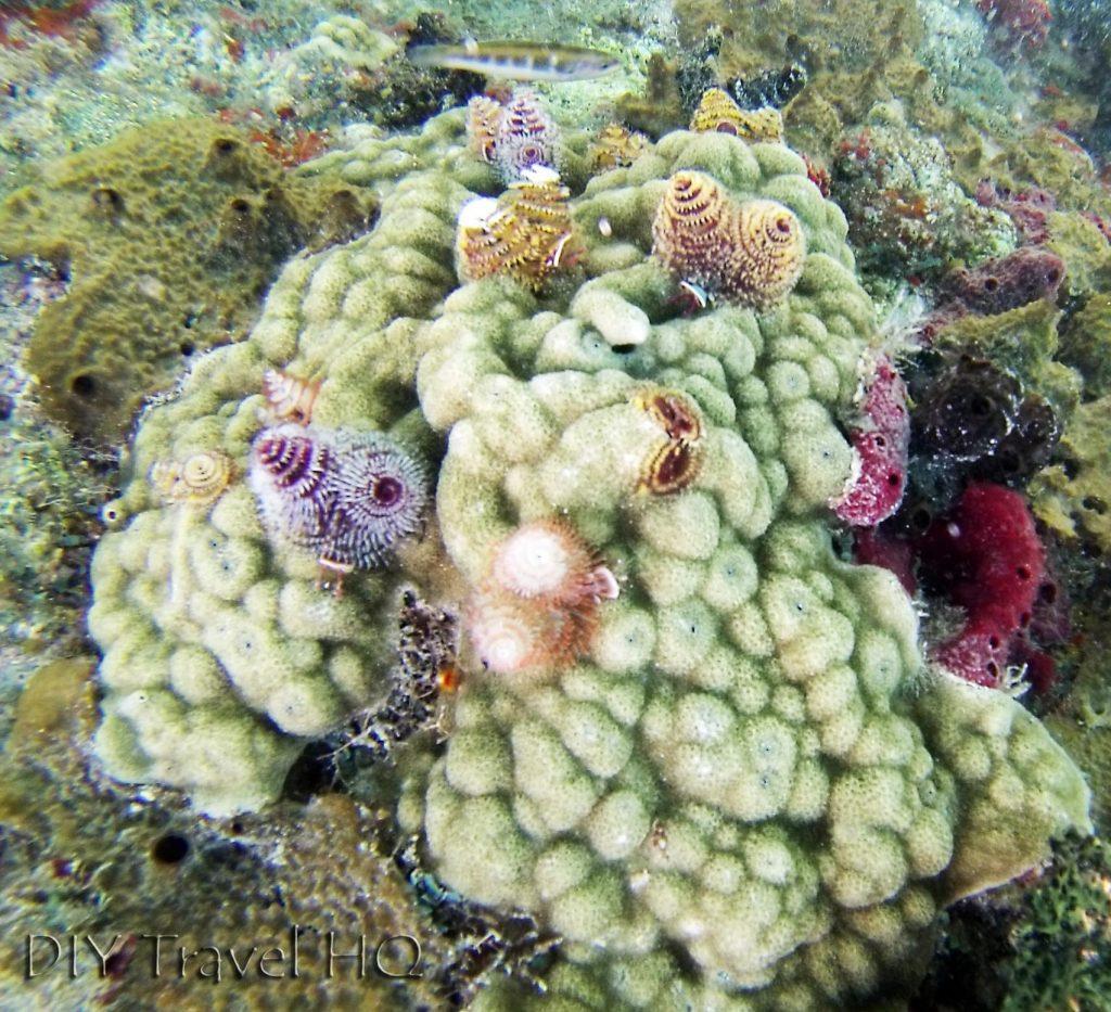 San Blas Icodub Reef Snorkeling