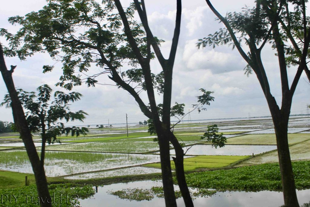 Bangladesh rice fields