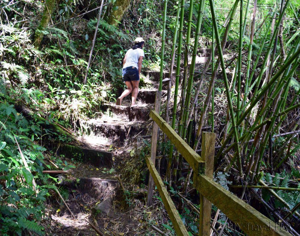 Climbing Stairs Sendero Los Quetzales Boquete Panama