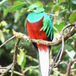 How to Hike Sendero Los Quetzales Without a Guide