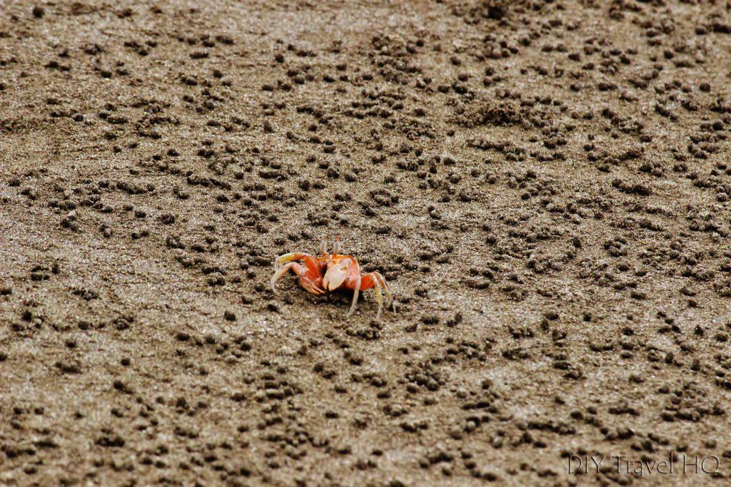 Hermit crab: Isla de la Plata tour