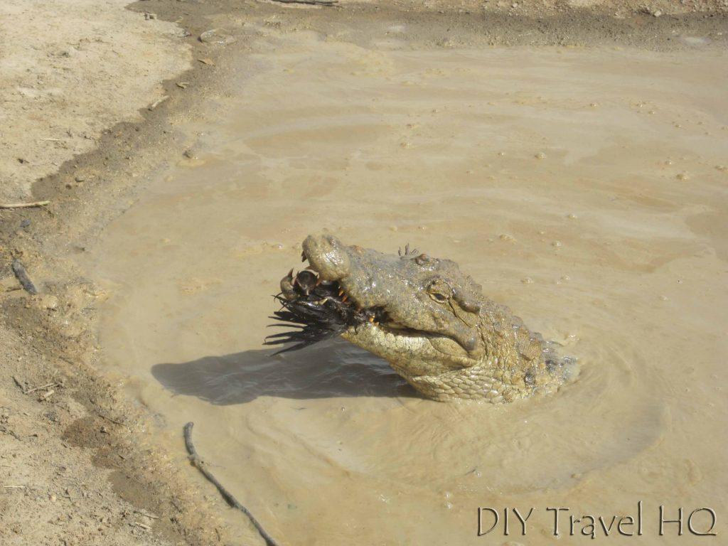 Parc Bazoule Crocodile