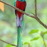 Sendero Los Quetzales: Hike the Quetzal Trail in Boquete