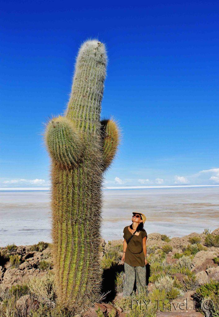 Cactus Uyuni