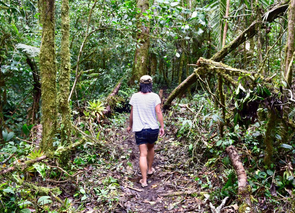 Sendero Los Quetzales Cloud Forest Hike