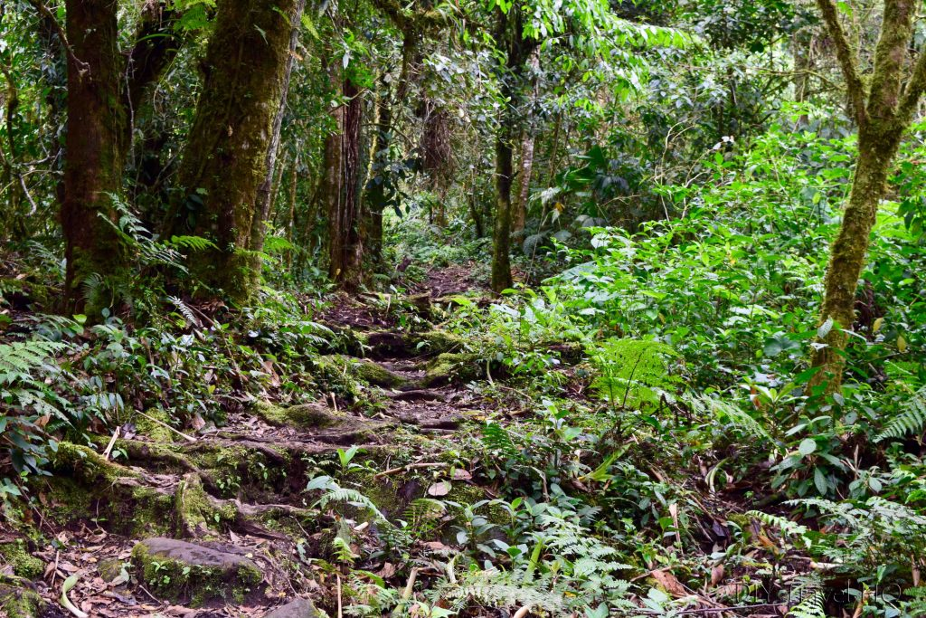 Sendero Los Quetzales Cloud Forest Trail