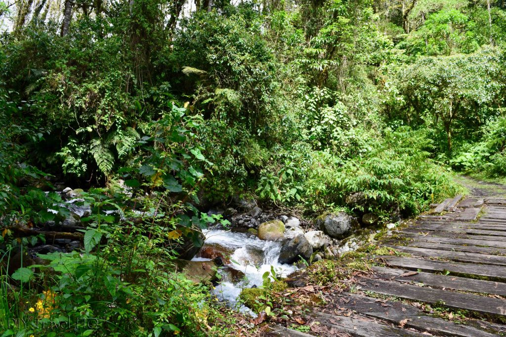 Sendero Los Quetzales Wood Plank Bridge