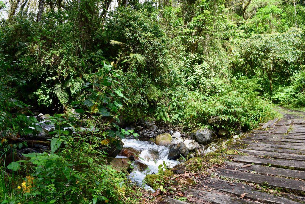 Sendero Los Quetzales Wood Plank Bridge