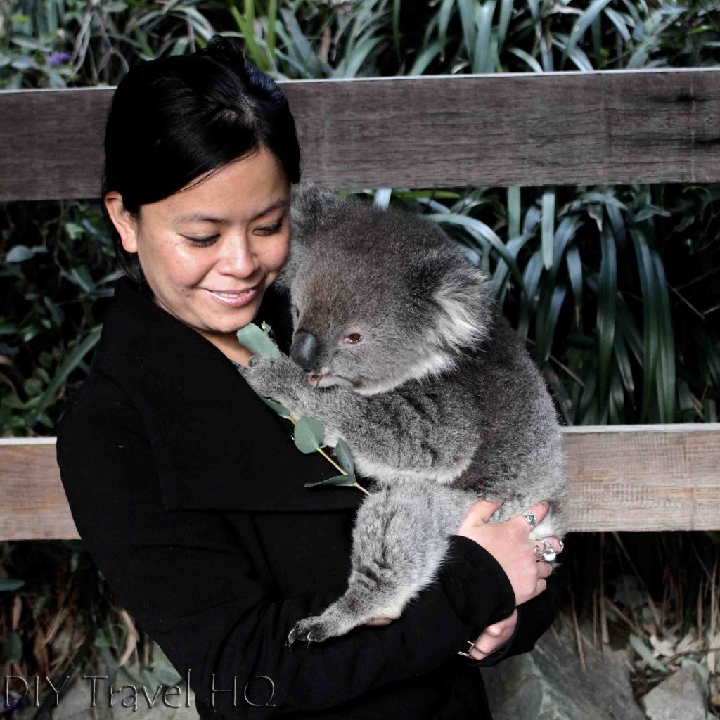 Where to cuddle a koala in Adelaide