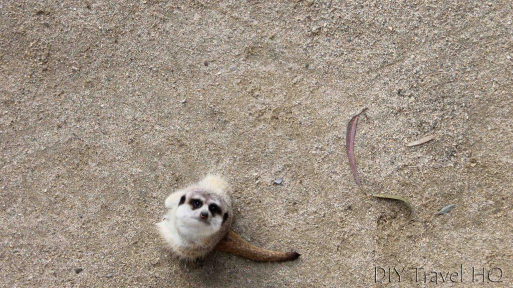 Meerkat Gorge Wildlife Park