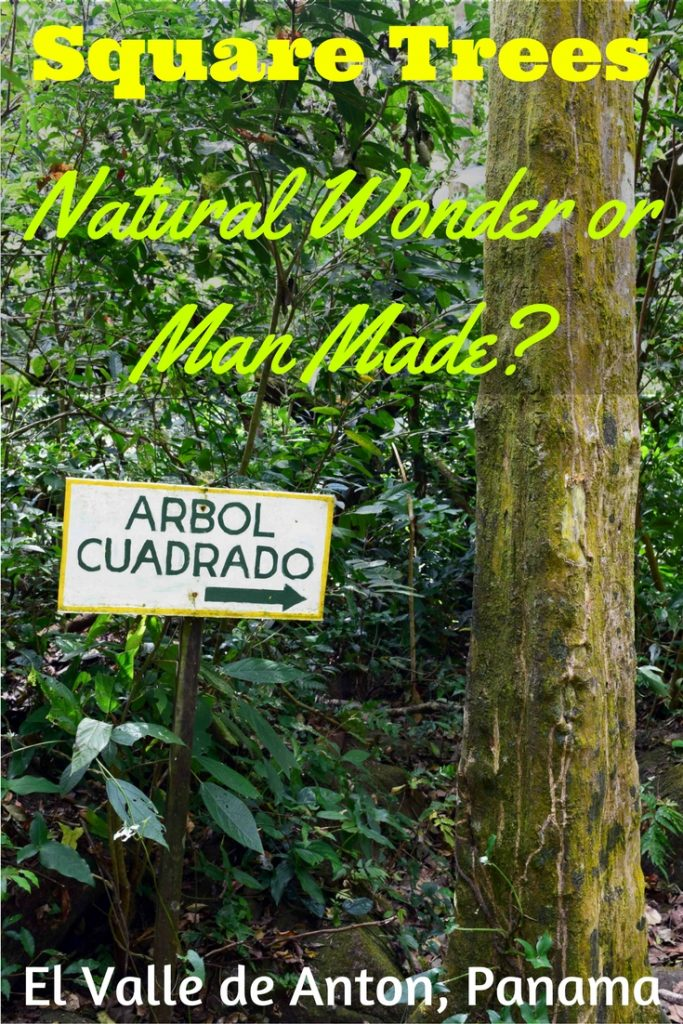 Square trees do exist in El Valle de Anton, Panama. Find out how to get to Los Arbol Cuadrados and how they formed their unusual shape #elvalledeanton #panama #panamatravel