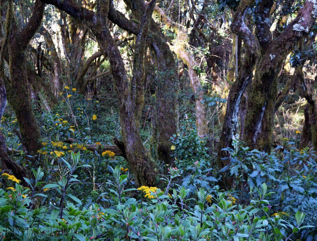 Volcan Baru Vegetation