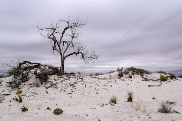 Tree on the horizon and White Sands